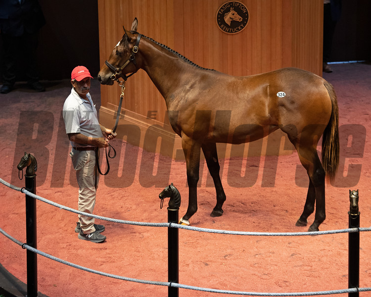 Hip 324 filly by Street Sense out of Viva Sheila at Eaton Sales, agent. Scenes, people and horses at The July Sale at Fasig-Tipton near Lexington, Ky. on July 13, 2021.