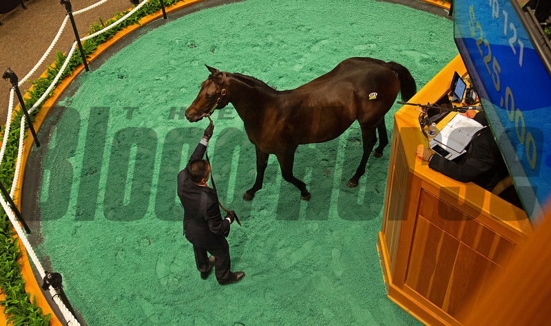 Hip 121 colt by Bolt d'Oro out of Just Louise at Paramount<br /> Sales scenes at Fasig-Tipton in Saratoga Springs, N.Y. on Aug. 10, 2021.