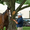 Hip 659 Hozier at Elite Sales.<br /> Scenes, people and horses at The July Sale at Fasig-Tipton near Lexington, Ky. on July 10, 2021.