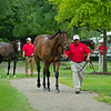 Hip 24 colt by Cloud Computing out of Franderella walks while other yearlings at Brandywine wait to show.<br /> Scenes, people and horses at The July Sale at Fasig-Tipton near Lexington, Ky. on July 11, 2021.