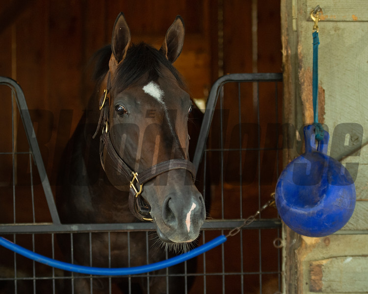 Silver State<br /> Saratoga racing scenes in Saratoga Springs, N.Y. on Aug. 5, 2021.