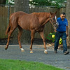 Hip 204 filly by Justify out of Storm Dixie from Paramount Sales, agent<br /> Saratoga training and sales scenes at Saratoga Oklahoma track and Fasig-Tipton in Saratoga Springs, N.Y. on Aug. 6, 2021.