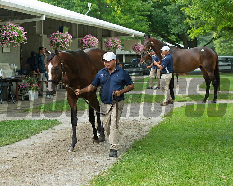 Hip 659 Hozier walking at Elite Sales.<br /> Scenes, people and horses at The July Sale at Fasig-Tipton near Lexington, Ky. on July 10, 2021.