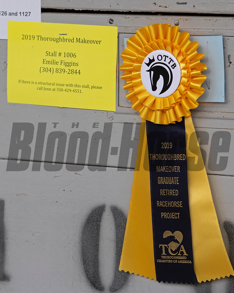 #48 Blazin Luck<br /> Thoroughbred Makeover at the Kentucky Horse Park.