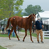 Hip 186 filly by Tapit out of Groupie Doll from Timber Town<br /> Keeneland September sale yearlings in Lexington, KY on September 12, 2020.