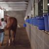 Caption: morning barn scene<br /> Kentucky Derby and Oaks training at Churchill Downs near Louisville, Ky., on Aug. 30, 2020 Churchill Downs in Louisville, KY.