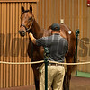 HIp 1197 colt by Quality Road out of Sustainable from Candy Meadows<br /> at Keeneland September sale yearlings in Lexington, KY on September 16, 2020.