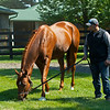 Monomoy Girl taking a break from training and at the WinStar training center on June 16, 2021.