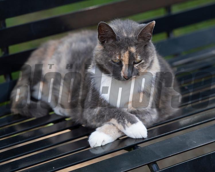 Caption: Hall of Champions barn cat named LOVEY<br /> Funny Cide and Go for Gin at the Kentucky Horse Park near Lexington, Ky., on Sept. 1, 2020 Kentucky Horse Park in Lexington, KY.