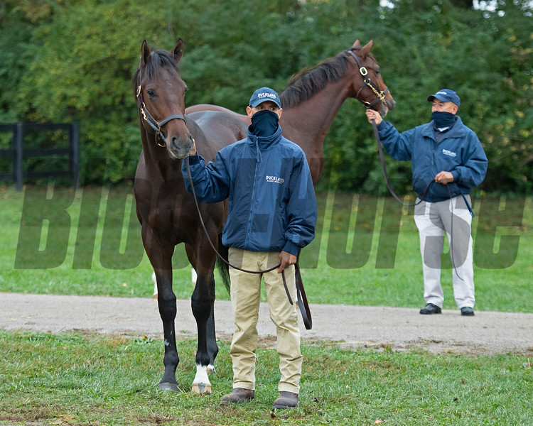 Scene at Buckland Sales with Hip 256 colt by Medaglia d'Oro from Life's a Gamble. Scenes and Look Aheads during the Fasig-Tipton Kentucky October yearling sale in Lexington, Ky. on October 24, 2020.