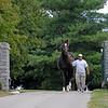 Caption:<br /> Tiznow at WinStar Farm near Versailles, Ky. on Sept. 16, 2008, in Lexington, Ky. <br /> Tiznow image9514<br /> Photo by Anne M. Eberhardt
