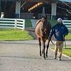 Hip 1694 Balance <br /> Sales horses at the Keeneland November Sale at Keeneland in Lexington, Ky. on November 12, 2020.