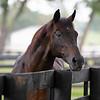 Caption: <br /> Go for Gin at the Kentucky Horse Park near Lexington, Ky., on Sept. 1, 2020 Kentucky Horse Park in Lexington, KY.