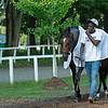 Keepmeinmind<br /> Horses in training during Travers week in Saratoga on Aug. 26, 2021.