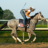 Essential Quality<br /> Horses in training during Travers week in Saratoga on Aug. 26, 2021.