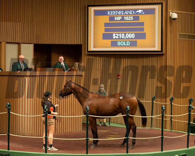 Hip 1625 colt by Uncle Mo out of Unspurned from Cara Bloodstock<br /> at Keeneland September sale yearlings in Lexington, KY on September 19, 2020.