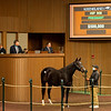 Hip 958 Contributing from Hill 'n' Dale<br /> Sales horses at the Keeneland November Sale at Keeneland in Lexington, Ky. on November 11, 2020.