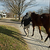 returing from the sales pavilion<br /> Keeneland January Sales at Keeneland near Lexington, Ky., on Jan. 14, 2021.