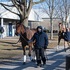 Horses arrive on Sunday morning and are headed to Four Star Sales. <br /> Fasig-Tipton February Winter Mixed sale on Feb. 7, 2021.