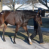Hip 672 Hello Hot Rod from Elite Sales<br /> Fasig-Tipton February Winter Mixed sale on Feb. 7, 2021.