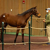 Hip 298 colt by Justify out of Inchargeofme from Nursery Place<br /> Sales horses at the Keeneland November Sale at Keeneland in Lexington, Ky. on November 10, 2020.