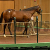 Hip 1878 colt by Twirling Candy out of My Own Story from Bluegrass Thoroughbred Services<br /> at Keeneland September sale yearlings in Lexington, KY on September 19, 2020.