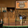 Hip 1694 colt by Violence out of Brinkley from Hidden Brook<br /> at Keeneland September sale yearlings in Lexington, KY on September 19, 2020.