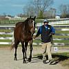 Hip 644 Golden Artemis from Denali Stud<br /> Sales horses at the Keeneland November Sale at Keeneland in Lexington, Ky. on November 9, 2020.