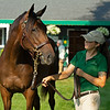 Hiip 155 Roadlesstraveled filly bby Quality Road out of More Hennessy at Lane's End, agent with handler Alex Moore<br /> Saratoga sales scenes at Fasig-Tipton in Saratoga Springs, N.Y. on Aug. 7, 2021.