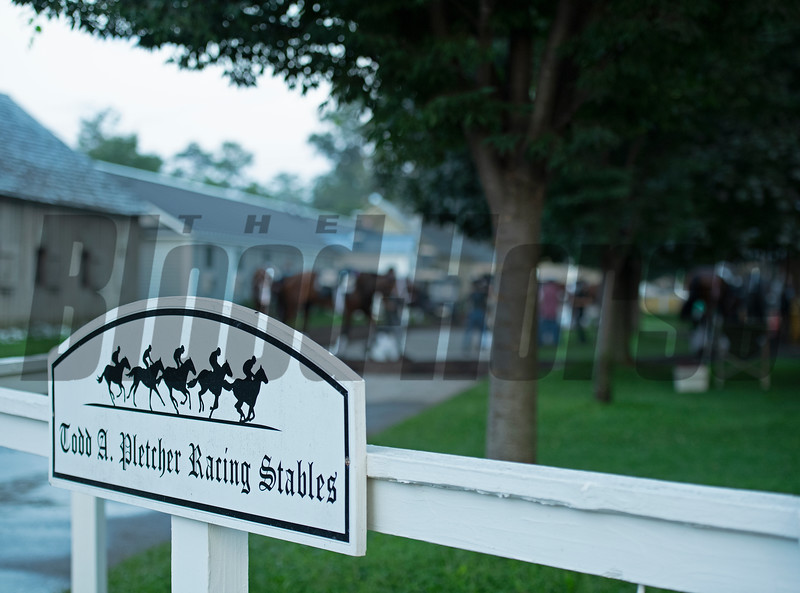 Horses in training during Travers week in Saratoga on Aug. 26, 2021.