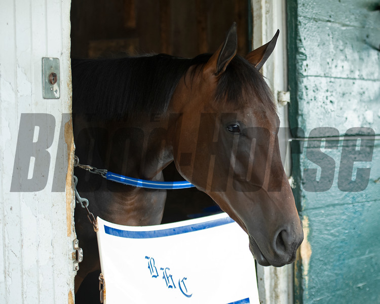 Famed, a half-sister to Essential Quality by Uncle Mo, in the Brad Cox barn at Keeneland on July 2, 2021.
