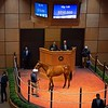 Hip 149 filly by Justify out of Emma's Encore at Baccari Bloodstock Scenes, people and horses at The July Sale at Fasig-Tipton near Lexington, Ky. on July 13, 2021.<br /> Anne M. Eberhardt