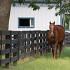 Caption: <br /> Funny Cide at the Kentucky Horse Park near Lexington, Ky., on Sept. 1, 2020 Kentucky Horse Park in Lexington, KY.