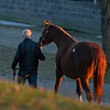 leaving the sales and heading to a new home<br /> Keeneland January Sales at Keeneland near Lexington, Ky., on Jan. 14, 2021.