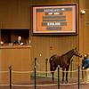 Hip 3085 Miss J McKay from ELiTE Sales<br /> Sales horses at the Keeneland November Sale at Keeneland in Lexington, Ky. on November 17, 2020.