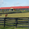 Mares and broodmare barn at Margaux near Midway, Ky., on Dec. 18, 2020.