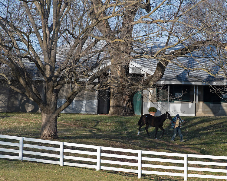 horse returns to barn<br /> Keeneland January Sales at Keeneland near Lexington, Ky., on Jan. 14, 2021.