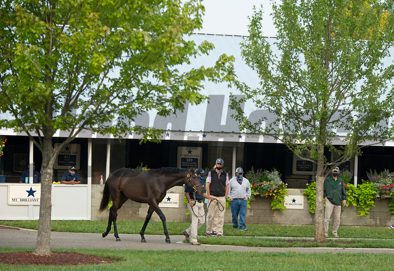 scene<br /> Keeneland September sale yearlings in Lexington, KY on September 14, 2020.