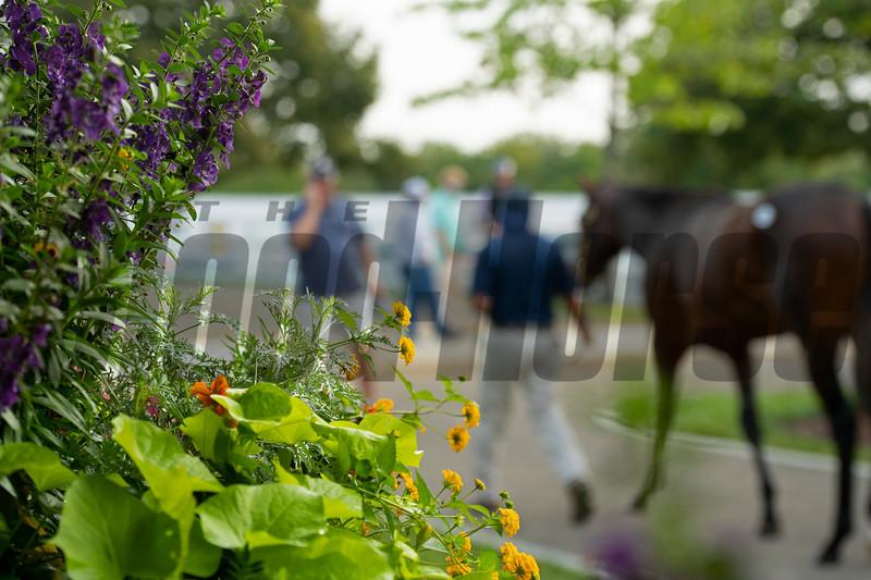 Keeneland September sale yearlings in Lexington, KY on September 14, 2020.