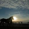 Handler walks a sales horse <br /> Keeneland January Sales at Keeneland near Lexington, Ky., on Jan. 14, 2021.