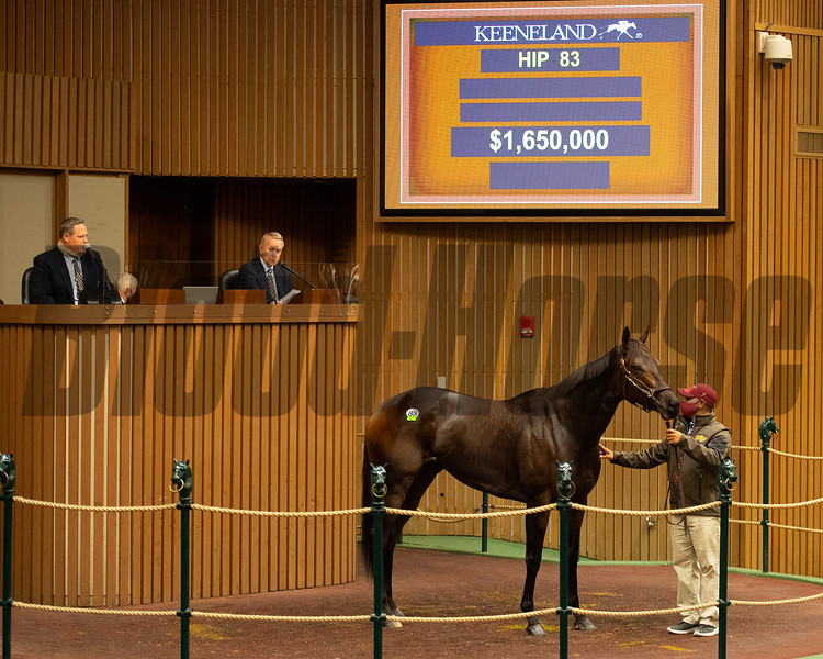 Hip 83 Ollie's Candy from Taylor Made<br /> Sales horses at the Keeneland November Sale at Keeneland in Lexington, Ky. on November 9, 2020.