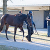 Hip 672 Hello Hot Rod from Elite Sales is assessed by the Spendthrift team. <br /> Fasig-Tipton February Winter Mixed sale on Feb. 7, 2021.
