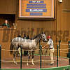 Hip 435 colt by Tapit out of Tara's Tango from Eaton, agent for Stonestreet<br /> at Keeneland September sale yearlings in Lexington, KY on September 14, 2020.