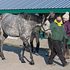 HIp 583 Critique from the Paul Pompa complete dispersal at Lane's End.<br /> Keeneland January Sales at Keeneland near Lexington, Ky., on Jan. 10, 2021.