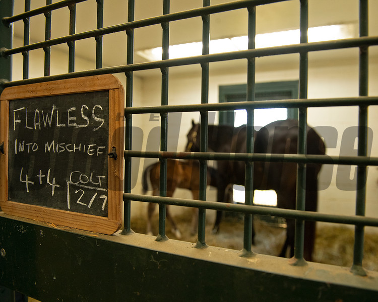 Stall card with mare and foal in the background. <br /> Flawless with her 2021 colt, a full brother to Authentic, at Hurricane Place farm near Cynthiana, Ky., on March 3, 2021.