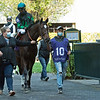 Wicked Bisou in the paddock priot to the Lexus Raven Run (G2) at Keeneland on October 3, 2020. Photo: Anne M. Eberhardt