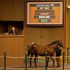 Hip 244C Unicorn Girl <br /> Sales horses at the Keeneland November Sale at Keeneland in Lexington, Ky. on November 9, 2020.