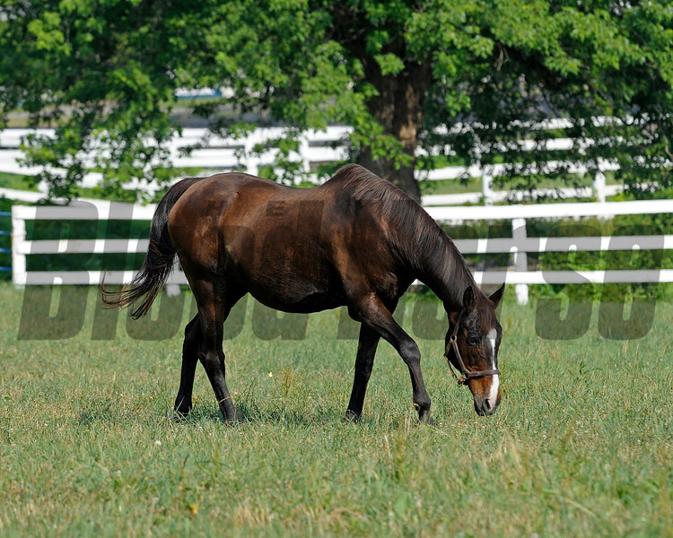 Caption: <br /> Twilight Ridge, 1985 Breeders' Cup Juvenile Filly winner, is now 29 years old and resides at Mike Rutherford's Manchester Farm near Lexington, Ky. The mare was photographed on the farm on June 29, 2012.<br /> TwilightRidgeOrigs 1 image649<br /> Anne M. Eberhardt photo