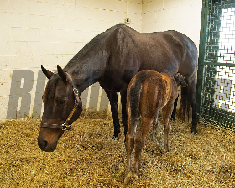 in their stall, the foal nurses. <br /> Flawless with her 2021 colt, a full brother to Authentic, born on Feb. 7 at Hurricane Place farm near Cynthiana, Ky., on March 3, 2021.