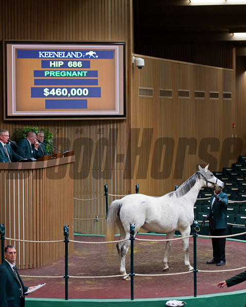 Hip 686 Chocolate Pop in foal to Bernardini at Four Star Sales brings $460,000 Keeneland January 2017